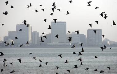 Pigeons fly past the Trident-Oberoi hotel in Mumbai