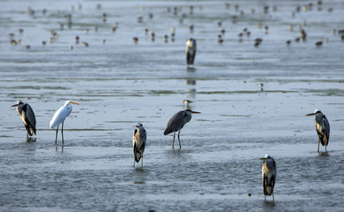 Wild birds gather in the protected area of the Sihcao Wildlife Preserve in Taiwan