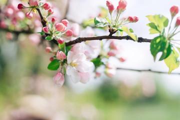 Trees in bloom beginning of spring