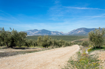 Hiking through idyllic landscape in Andalusia, Spain, during springtime