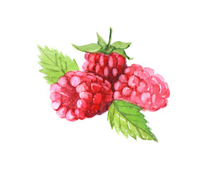 Raspberries with leaves, watercolor illustration