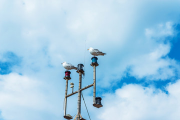 Two seagulls on the mast of the ship, in the coastal town, wild birds, blue sky and clouds