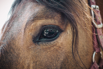 Beautiful sad horse eyes