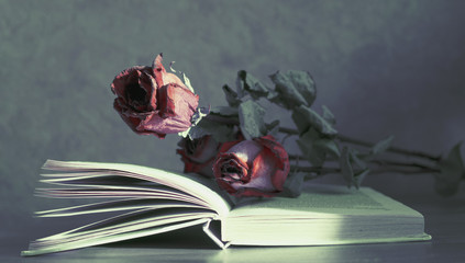 Dry flowers lie on the book. herbarium