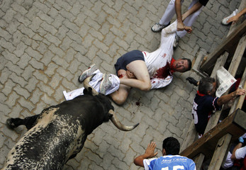 A Miura fighting bull gores a runner during the sixth bullrun of the San Fermin festival in Pamplona