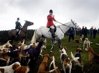Huntmaster of the South Notts fox hunt gathers his hounds in Alderwasley in Derbyshire in central England.