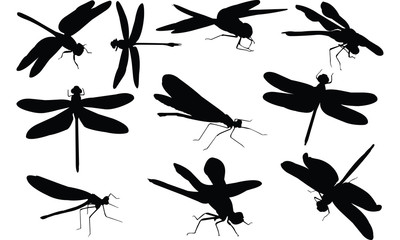 Dragon fly Silhouette vector illustration
