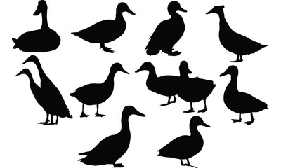 Duck Silhouette vector illustration