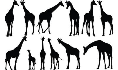 Giraffe Silhouette vector illustration