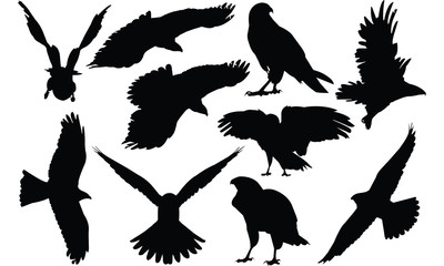 Hawk Silhouette vector illustration