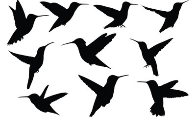 Humming bird Silhouette vector illustration