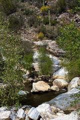 Giant Saguaros, deciduous trees, and colorful rocks along Sabino Creek in Sabino Canyon, near Tucson, Arizona