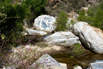 Purple flowers, deciduous trees, and colorful rocks along Sabino Creek in Sabino Canyon, near Tucson, Arizona