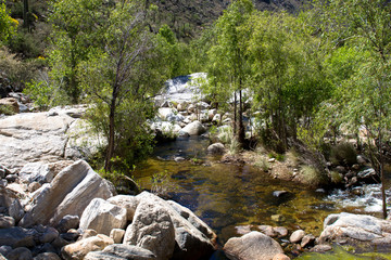 Deciduous trees and large rocks along Sabino Creek in Sabino Canyon, near Tucson, Arizona