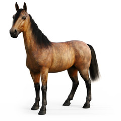 Bay horse on a white background. 3d rendering