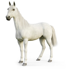 White stallion horse on an isolated white background. 3d rendering