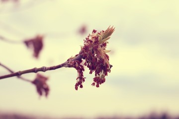 Spring Branch at Sunset