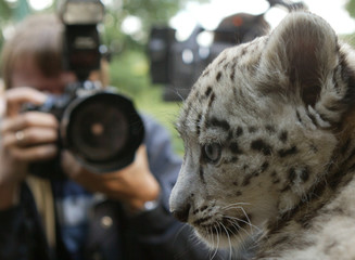 A photographer takes pictures of a two-month old male snow leopard 'Kashi' during its first public ...