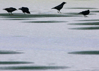 Birds rest on a frozen pond in a park in central Brussels