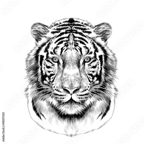 Tiger Head Full Face Symmetrical Sketch Vector Graphics Black And