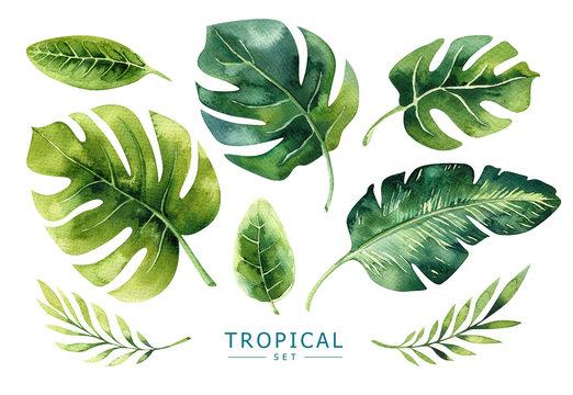 Hand drawn watercolor tropical plants set. Exotic palm leaves, j