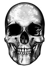 Skull Retro Style Drawing