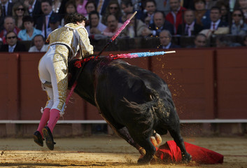 Spanish matador Curro Diaz is tackled by a bull during a bullfight in Seville