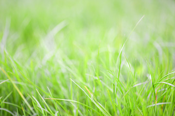 Close-up image of fresh spring green grass. Green grass photo background or texture. Beautiful bright field of green grass. Element of design. Natural background.