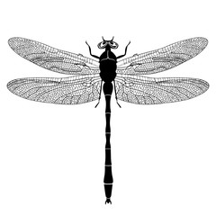 Dragonfly view from above, black and white monochrome illustration, isolated on white background, vector insect, coloring book, banner, card, poster