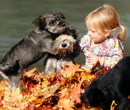 A young girl plays with three dogs on a sunny autumn day in a park in Innsbruck