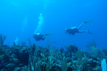 Diving in Puerto Rico