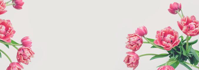 Blumen Hintergrund (Tulpen)