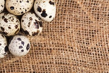Quail eggs on sackcloth