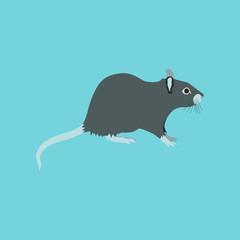 illustration in flat style rat