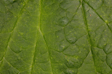 Macro picture of a green leaf structure