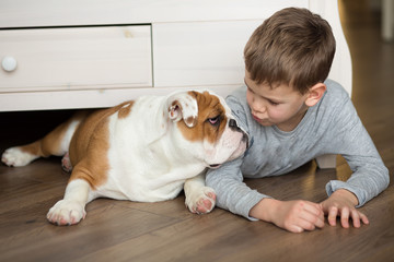 Cute boy plays on the floor on a carpet with puppies of English bulldog