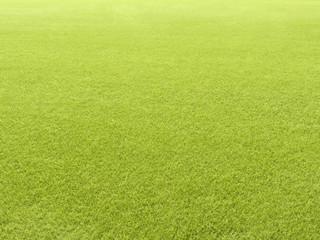 Clean short cut grass