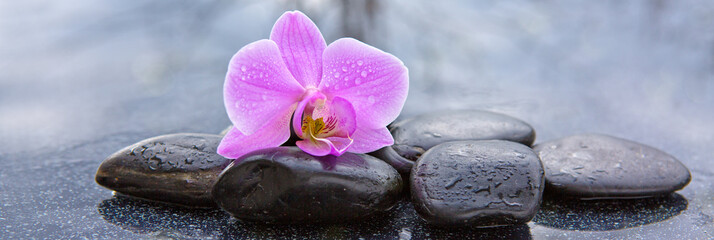 Tuinposter Orchidee Pink orchid and basalt stones on the black background.