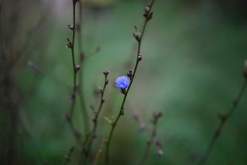 Single blue flower on branch, close up