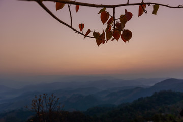 Dimly light of the morning sun and shadow tree  at Doi Hua Mod , Umphang district, Tak province, Thailand