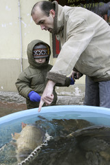 A man with his child points to carp in plastic tank in Prague