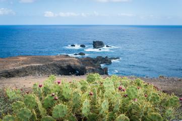 Cactus with cactus fruits, Canary Islands, Gran Canaria - Stock Photo