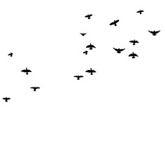 Silhouette of flying birds, flight,