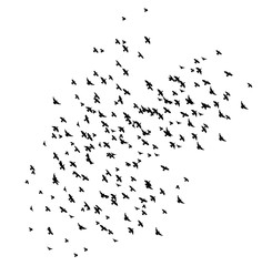 Silhouette of flying birds,  many