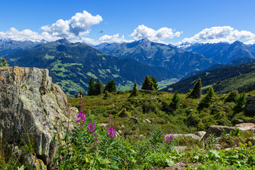 Wall Mural - High mountains view with green meadow and stones in the foreground.  Zillertal High Alpine Road, Austria, Tirol, Zillertal
