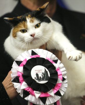 Winning cat in Best in Show is held up at the 2006 CFA-Iams Cat Championships in New York