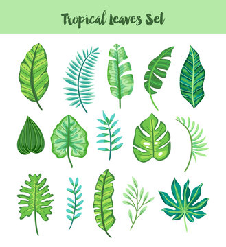 Isolated Hand Drawn Tropical Leaves Set. Vector illustration.