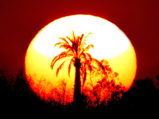 A PALM TREE IS SILHOUETTED DURING SUNSET NEAR U.S. MARINE'S CAMP BAHARIA NEAR FALLUJA.