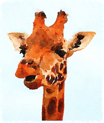 Digital watercolor painting of a close-up of a gorgeous giraffe's face with a light background. Giraffe is chewing.