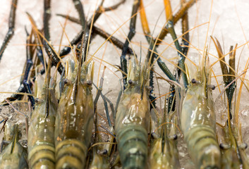 Fresh Tiger prawns on ice selling in seafood market